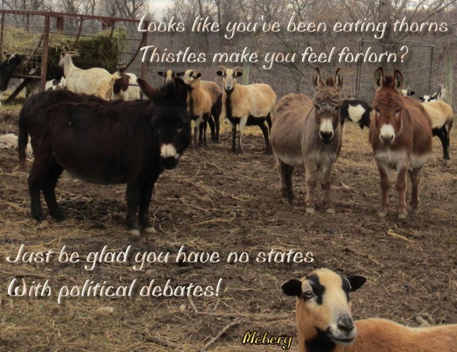 5 animals pasture e
