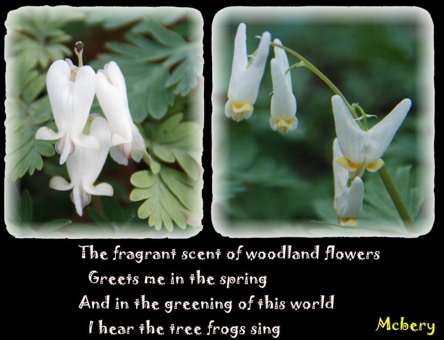 1 spring flower 2