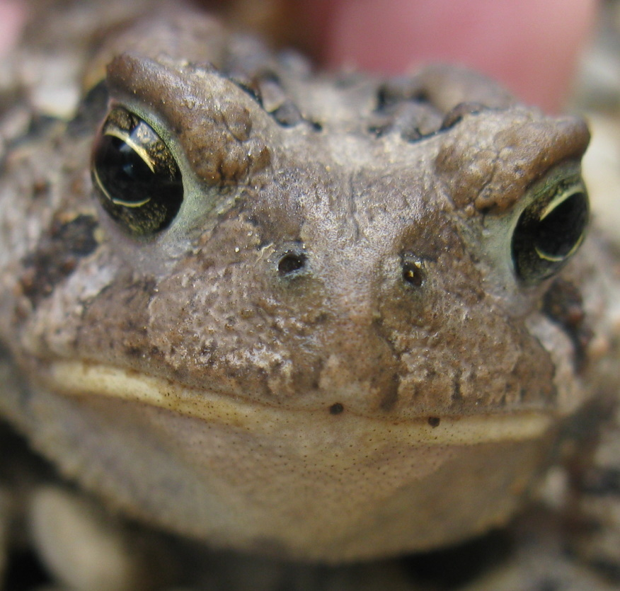 5 toad