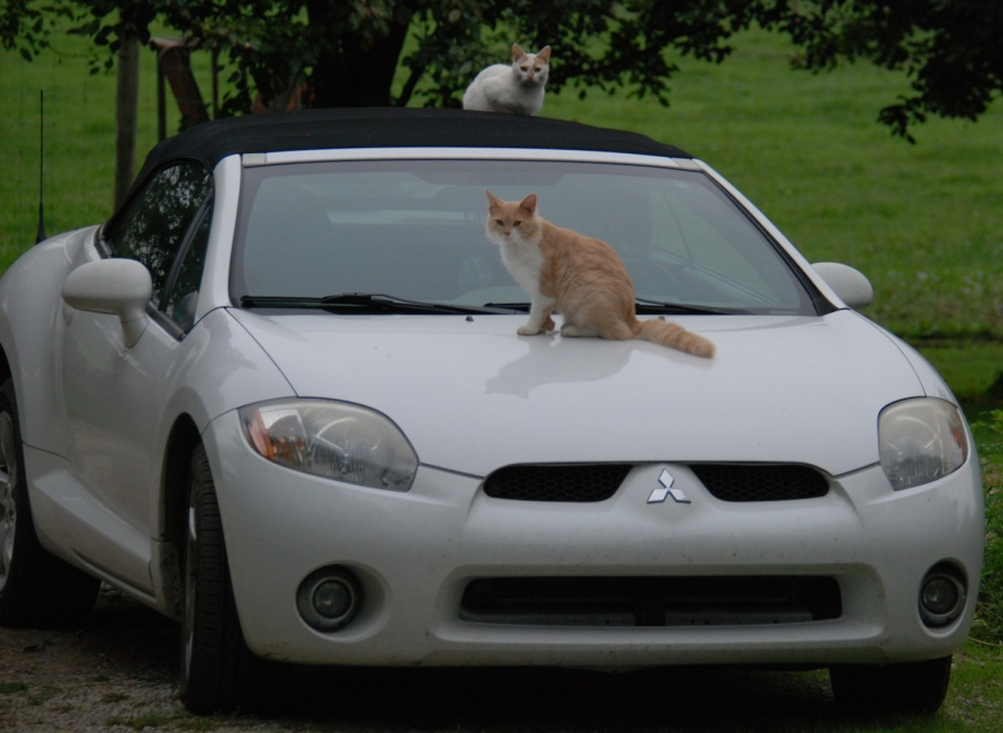 6-trevors-car-cats