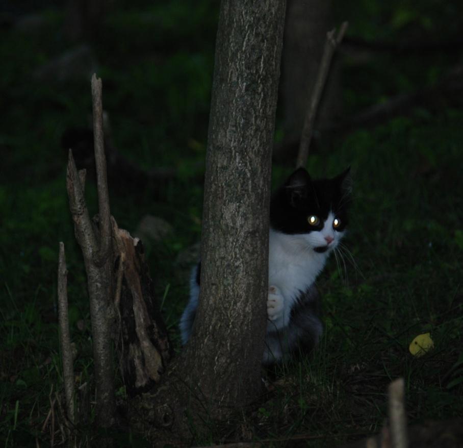 8-cat-2