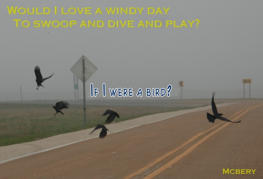 5 windy day birds