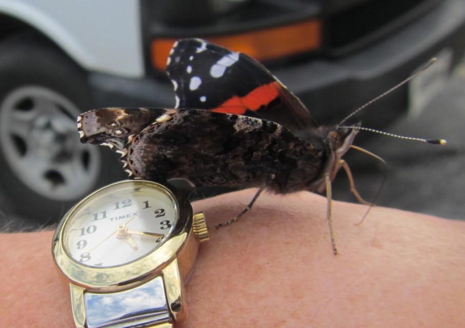 3 f butterfly