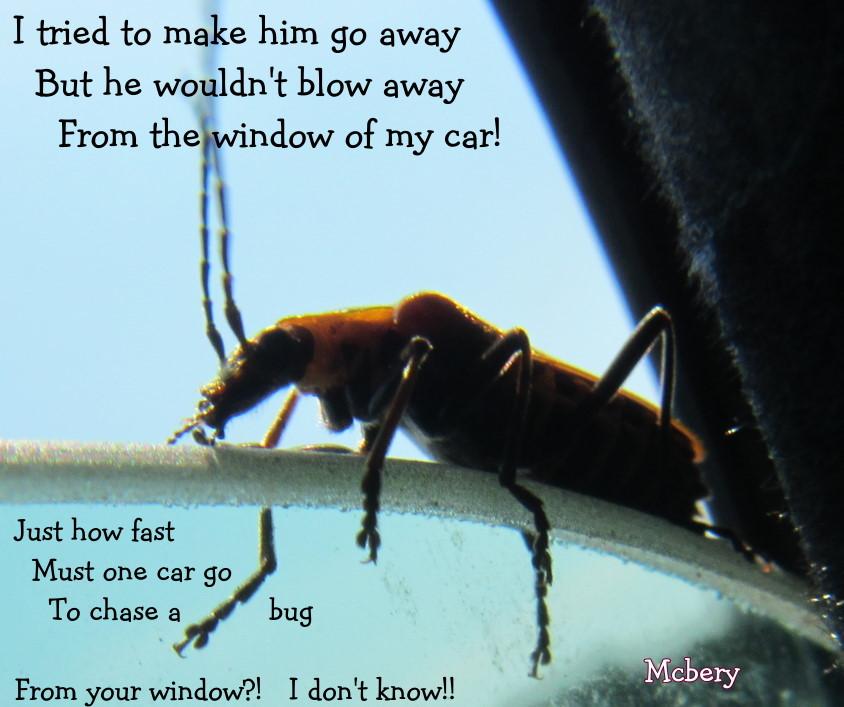 1 bug on car window