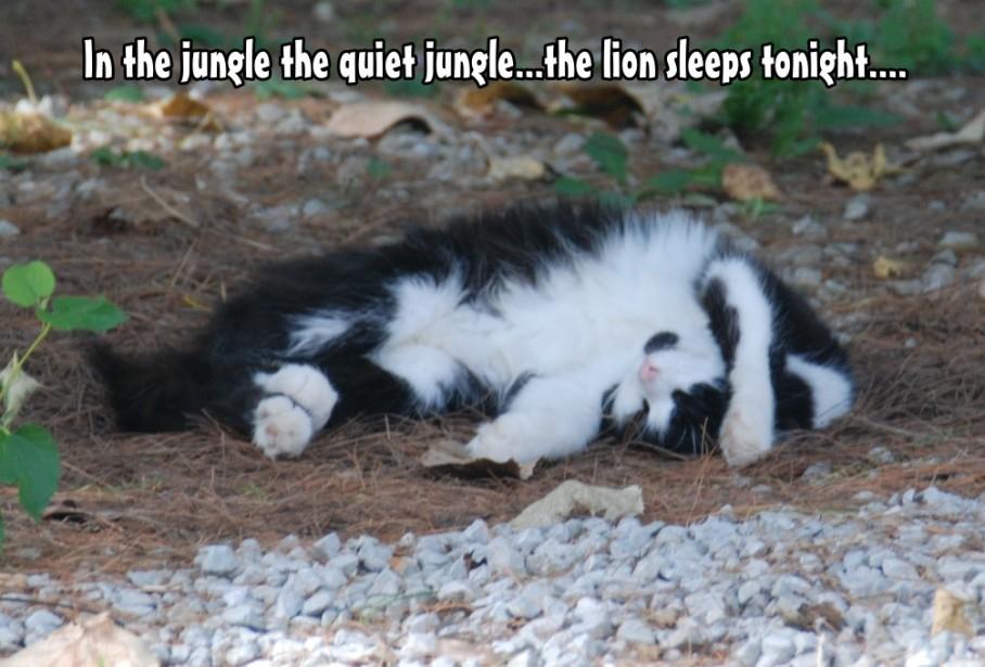 4 cat sleeps