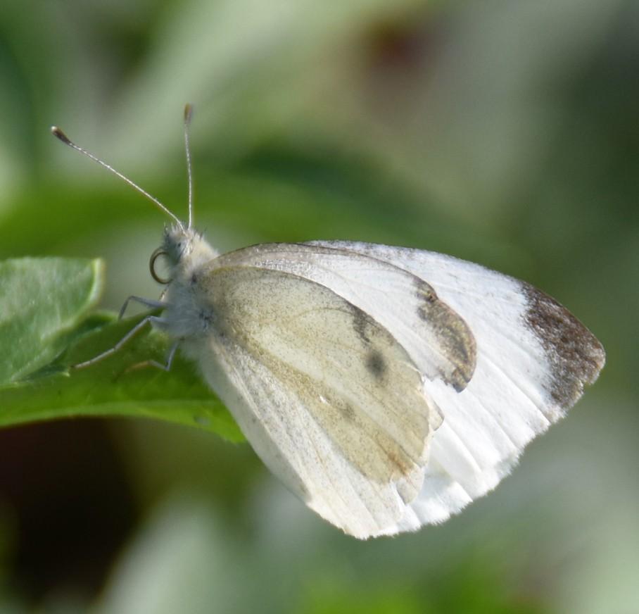 4 butterfly 9