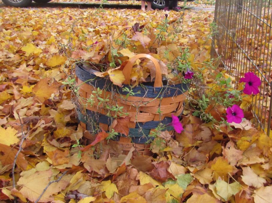 2 r fall flowers yard