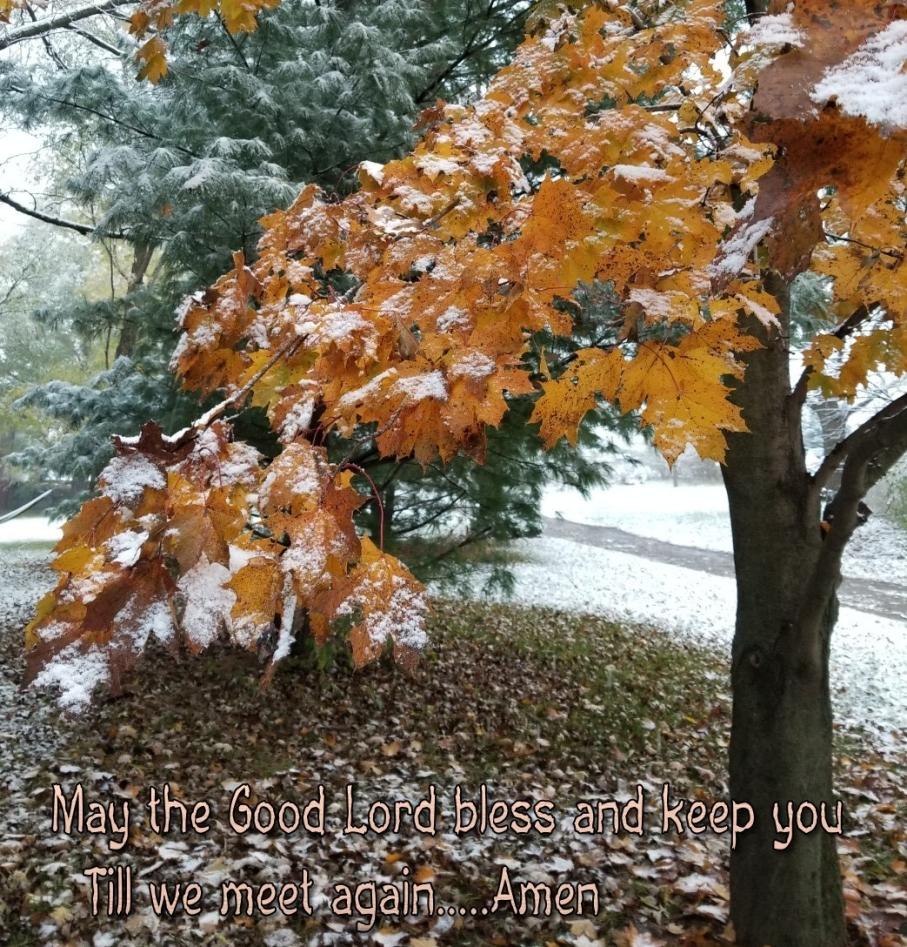 3-o-fall-trees-november.jpg