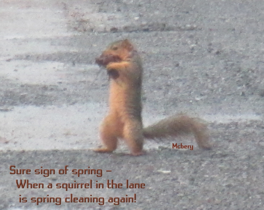 1 n squirrel spring cleaning e