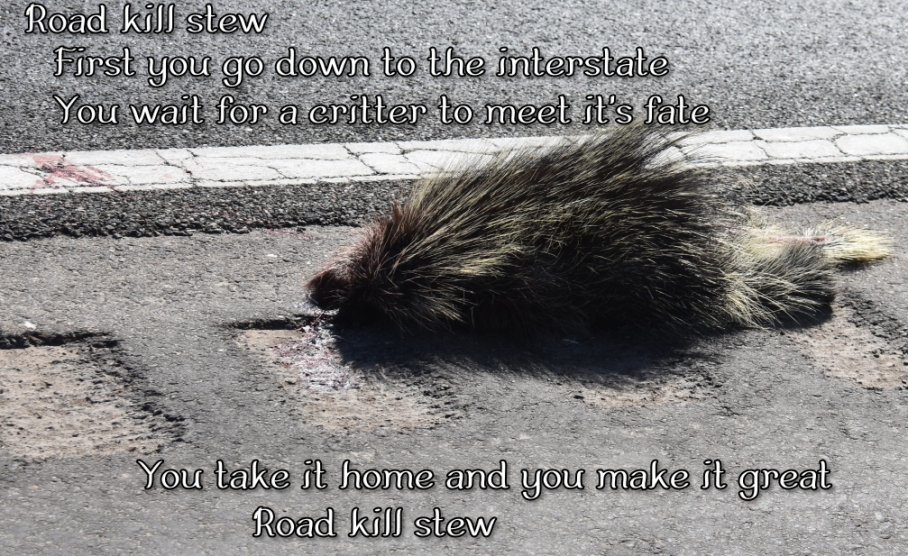 4 v road kill porcupine e