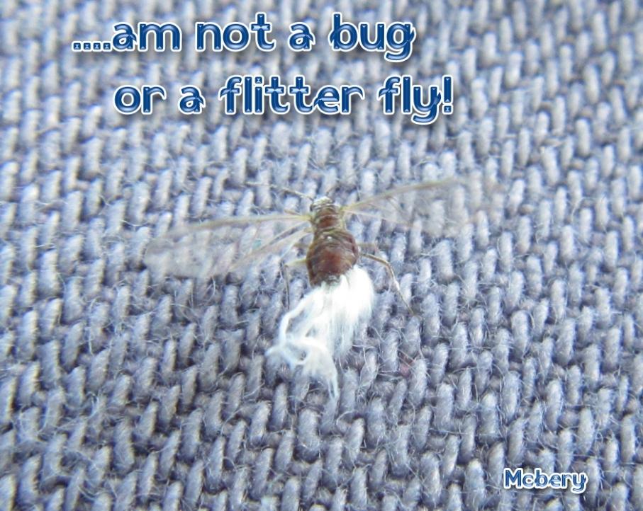 4 flitter bug 3 e