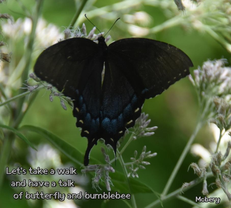 5 wellfield 1 butterfly e