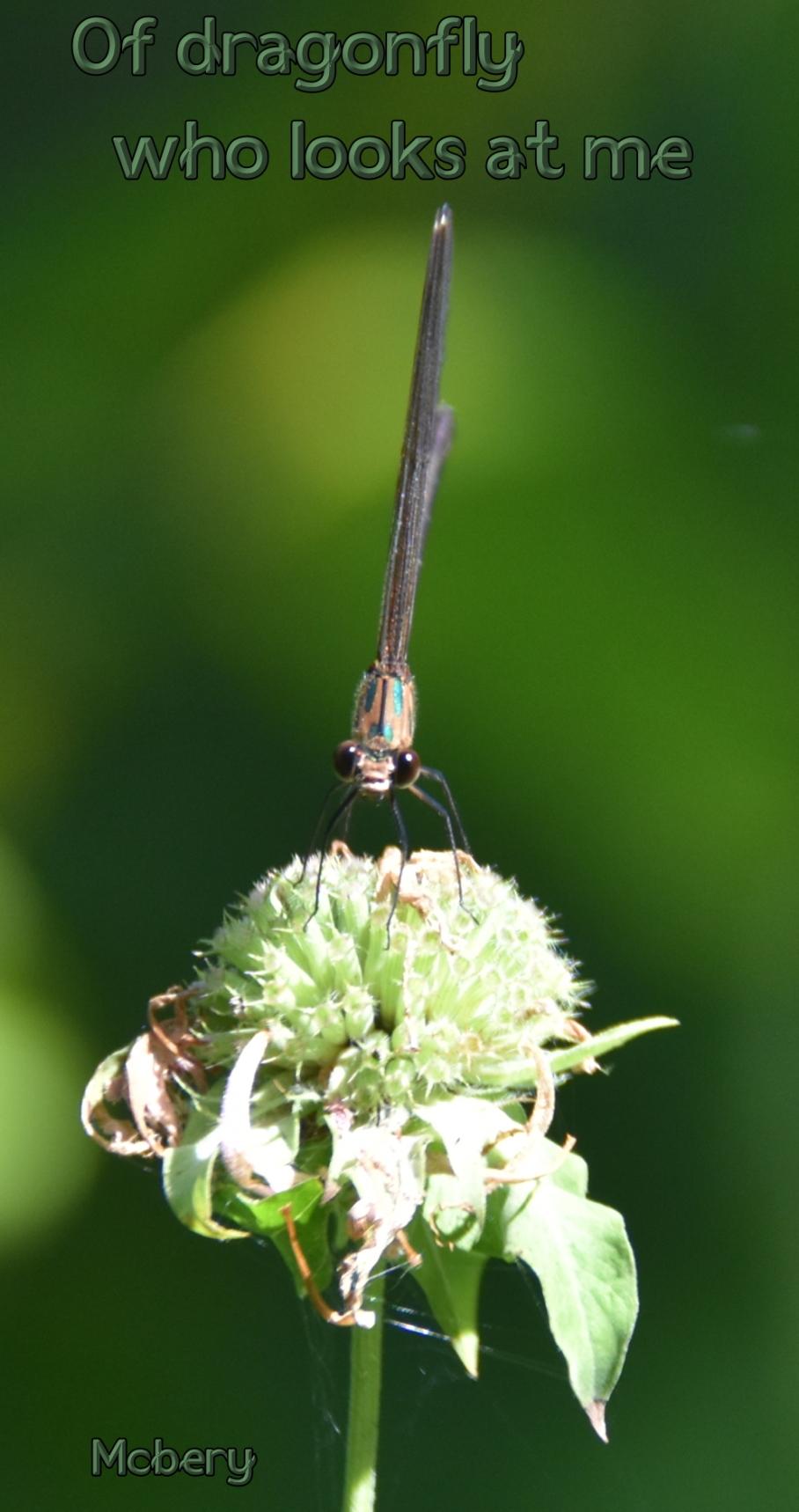 5 wellfield 1 dragonfly e