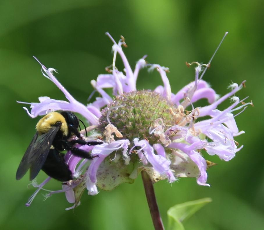 6 wellfield 3 bee